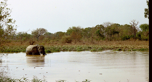 Elephant in Upper West Region