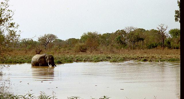 Elephant in Upper West Region